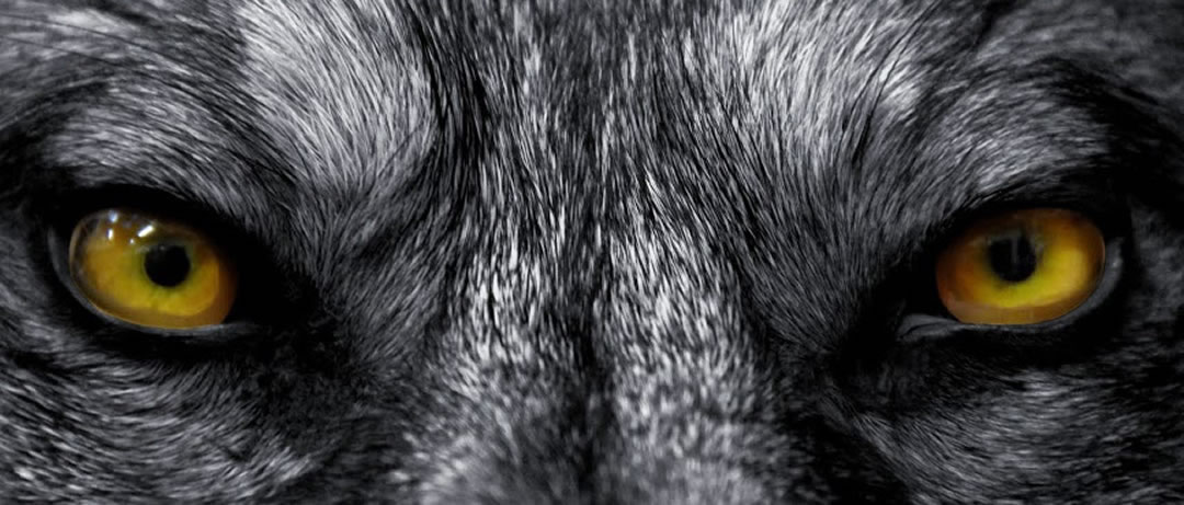 WOLF-1080-4611